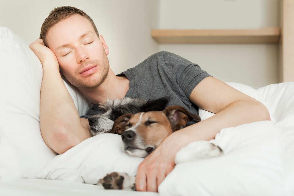 La siesta con Kuzco es un placer